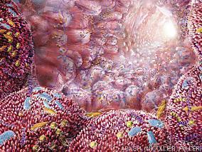 bacterias-intestinales-mejoran-alergia-alimentaria